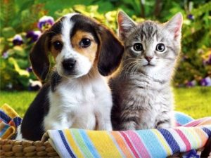 Pets and Your Rental Property....